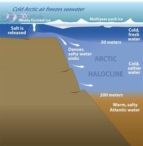 Arctic Halocline