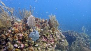 Coral Larvae Use Sound to Find a Home on the Reef