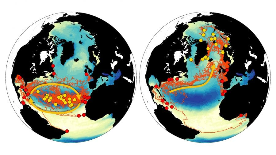 Model-illustration-of-plastics-concentrations-in-global-ocean-from-Sam-Levang_508794.jpg