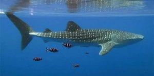 fish_sharks_main_197400.jpeg