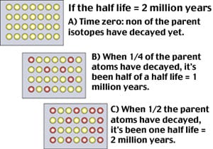 "The ""half life"" of a parent isotope is the time it takes for half of it to decay to its daughter isotopes."