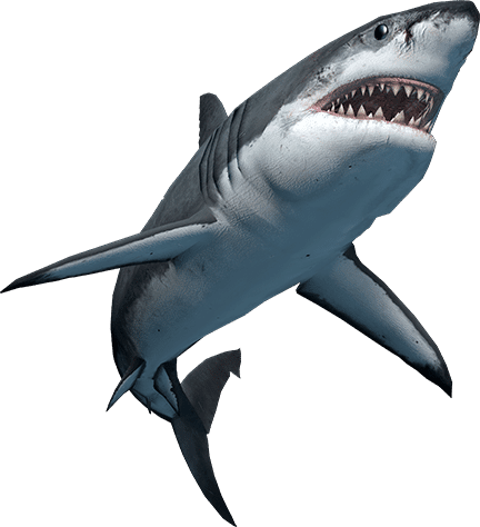 SharkAscending