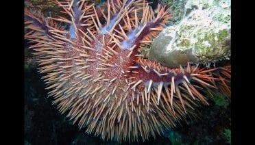Consuming Coral