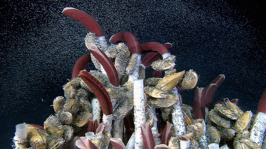 Tubeworms, clams, and crabs at a hydrothermal vent site. (Woods Hole Oceanographic Institution)