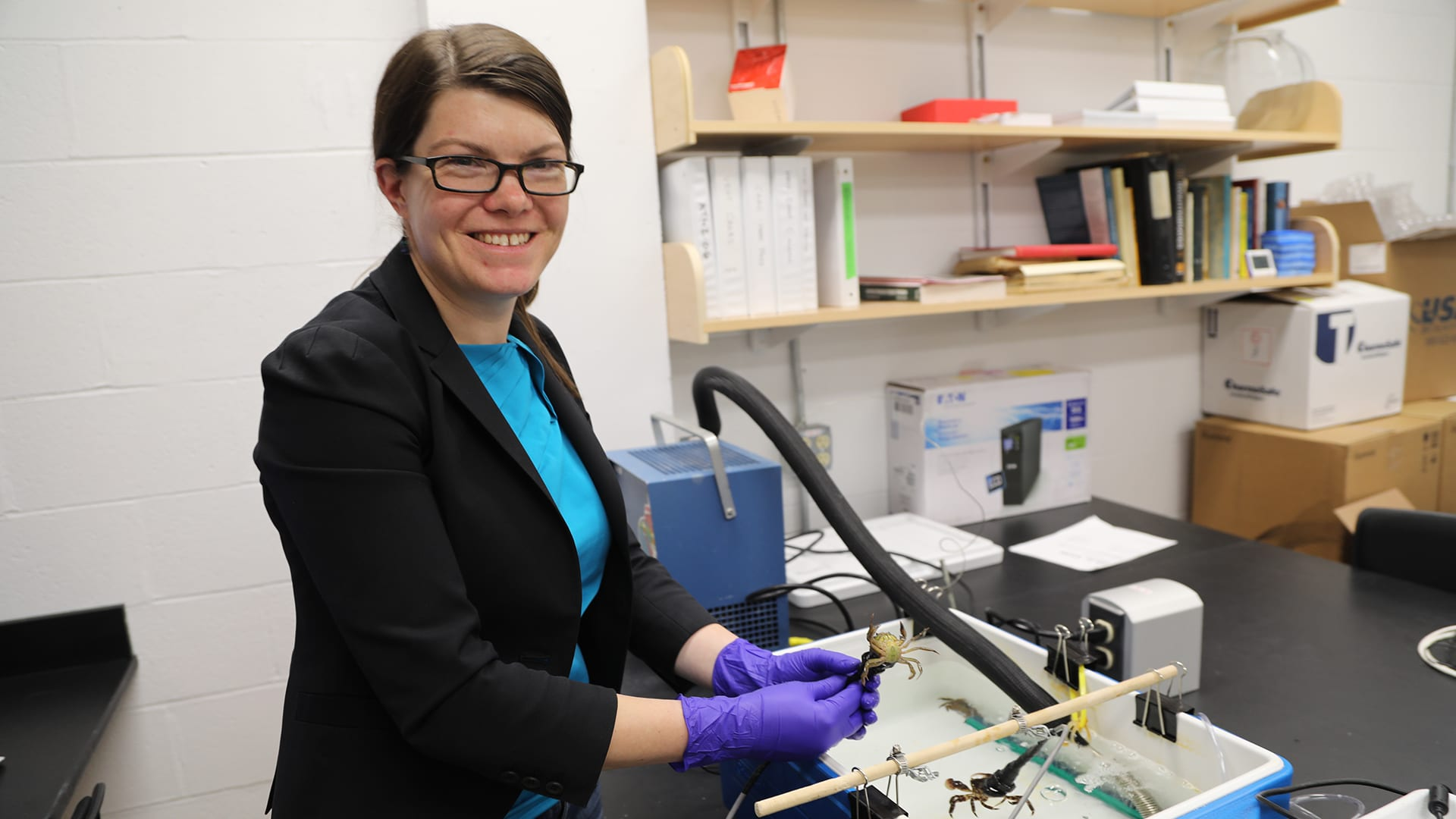 WHOI scientist Carolyn Tepolt in her lab with one of her favorite study species, the European green crab. Green crabs are one of the world's most successful marine invasive species, and Tepolt says she hopes to uncover genetic variation in these populations that has helped this species flourish in new environments