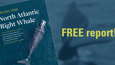 Download Right Whale Report