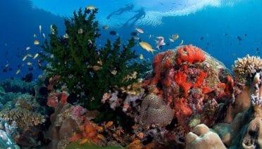 super reefs