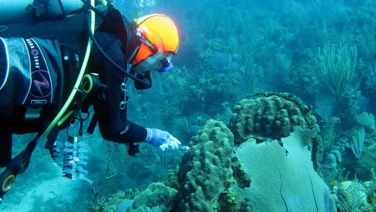 Laura Weber collects a syringe sample from seawater surrounding an Orbicella faveolata coral colony in Jardines de la Reina, Cuba.