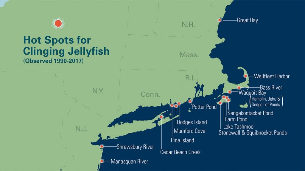 Hot Spots for Clinging Jellyfish