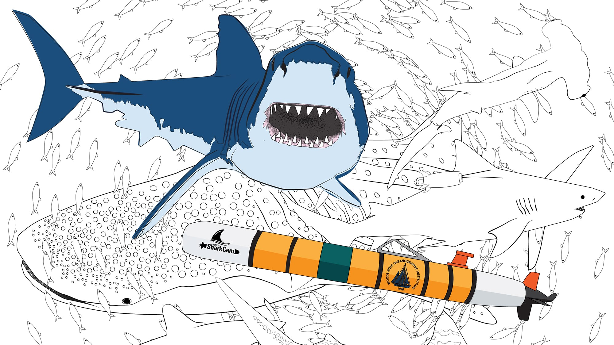 Top 20 Shark Coloring Pages For Your Little Ones | 1125x2000