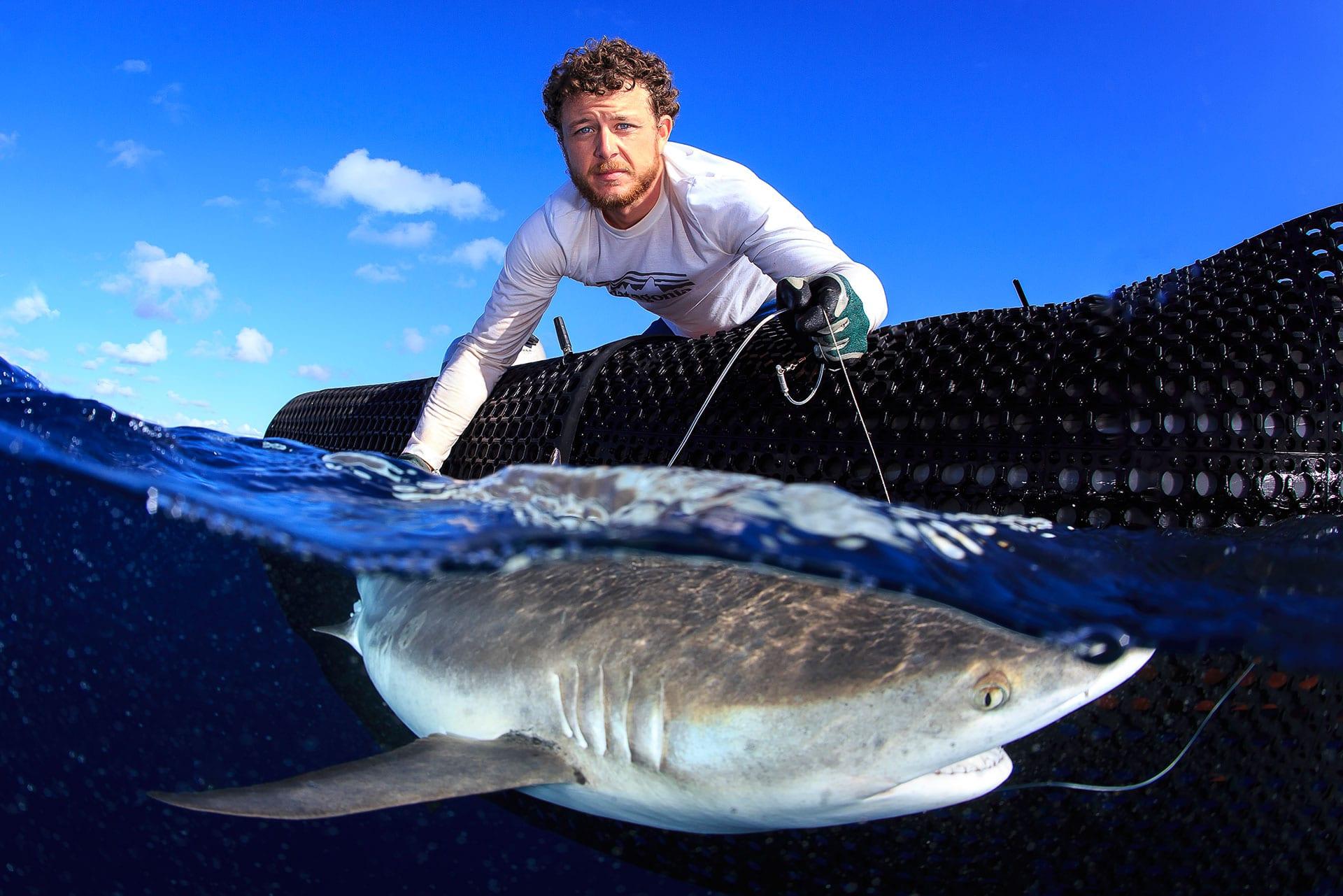 tagging a shark