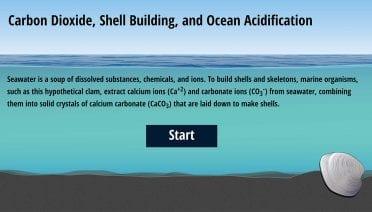 calcification-interactive