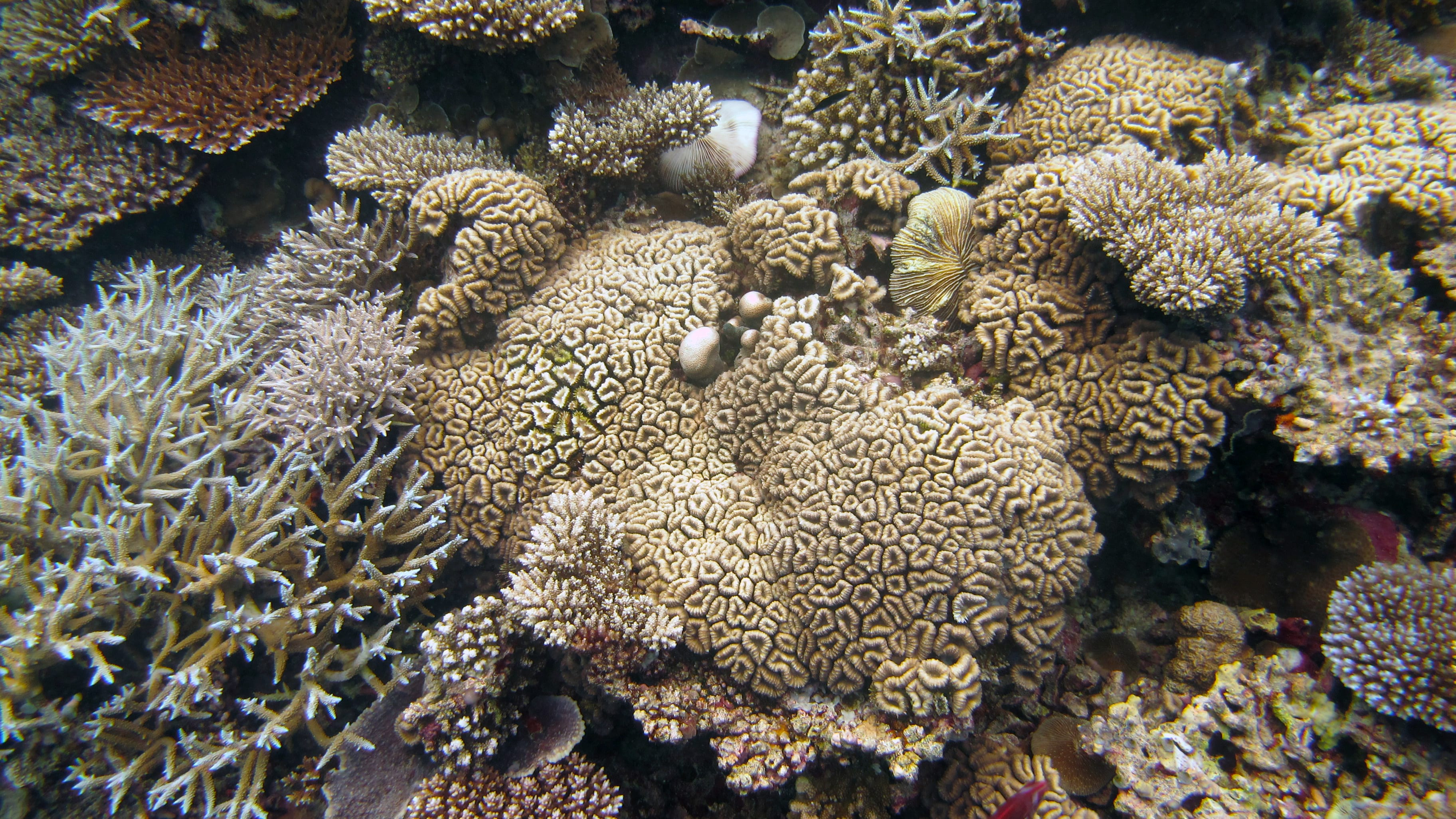 New Study Measures How Much Of Corals Nutrition Comes