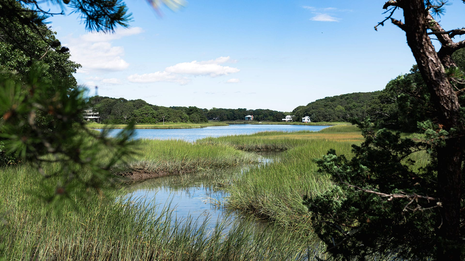 The quiet inlets of Wild Harbor were once saturated by a portion of the oil spilled by the barge Florida. Today WHOI scientists say the marsh ecosystem has made an stunning recovery. (Photo by Daniel Hentz, Woods Hole Oceanographic Institution)
