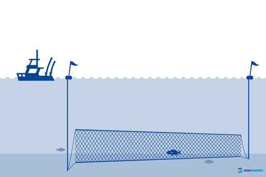 A gillnet is a wall of mesh netting that hangs in the water column, typically made of monofilament or multifilament nylon. (Graphic by NOAA Fisheries)