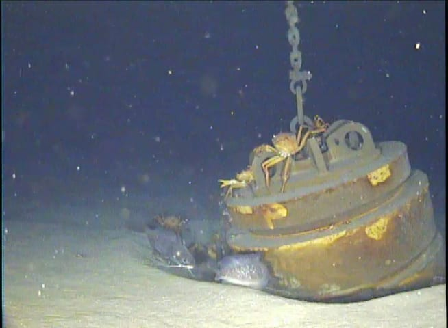 The OOI mooring anchor sits in roughly 1300 feet of water, where a number of crabs and fish amble around looking for food. (Photo by Daniel Hentz, Woods Hole Oceanographic Institution)