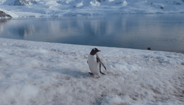 penguin polar latitudes