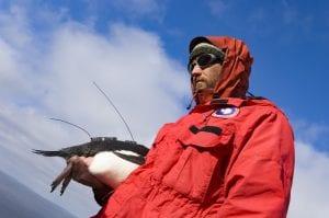 Penguin wrangler