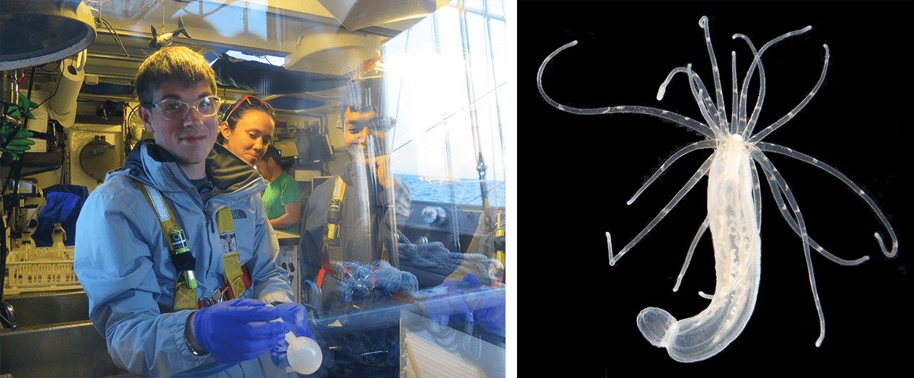 Cory Berger preparing water samples on the SSV Corwith Cramer - Photo by Laura Heinen and Nematostella_vectensis_Photo by Smithsonian Environmental Research Center