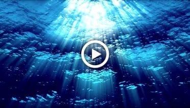 OceanPlayThumbs