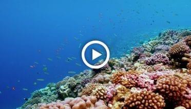 CoralPlayYT_ThumbNails