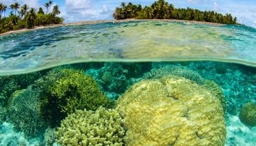 Marshall islands coral