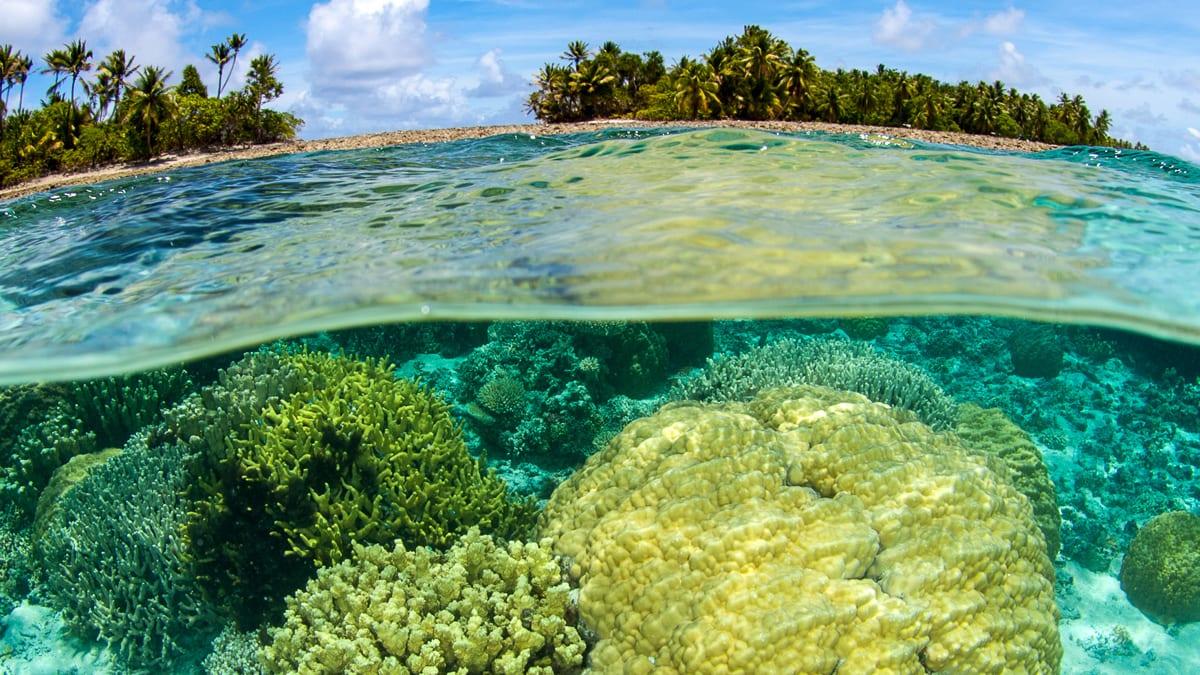 Marshall Islands coral