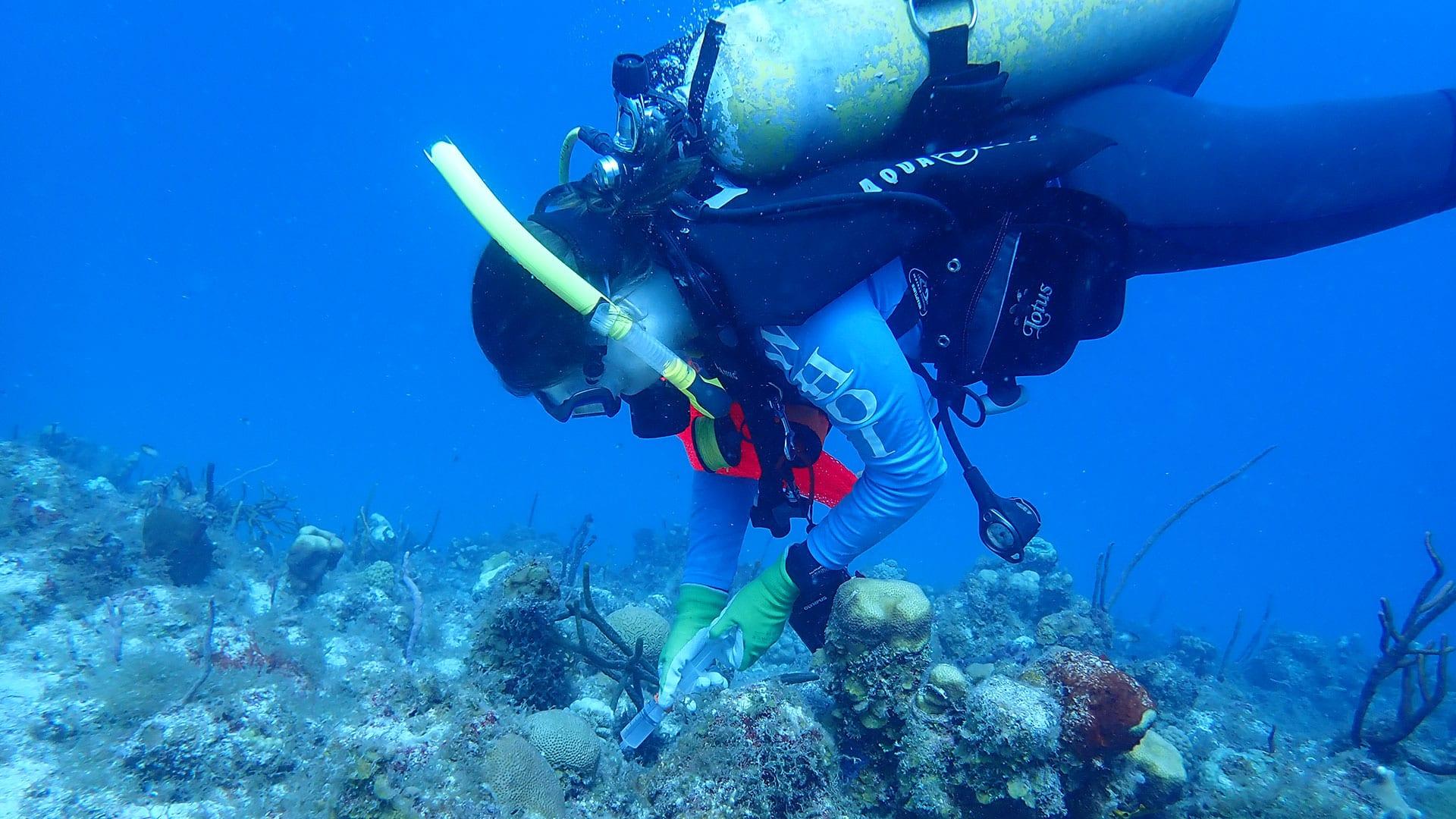 Becker diving