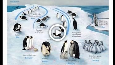 PenguinPlayThumbs