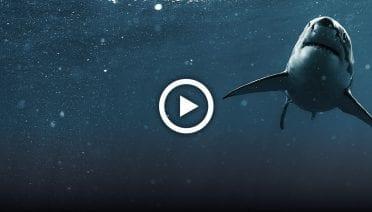 sharkPlayThumbs