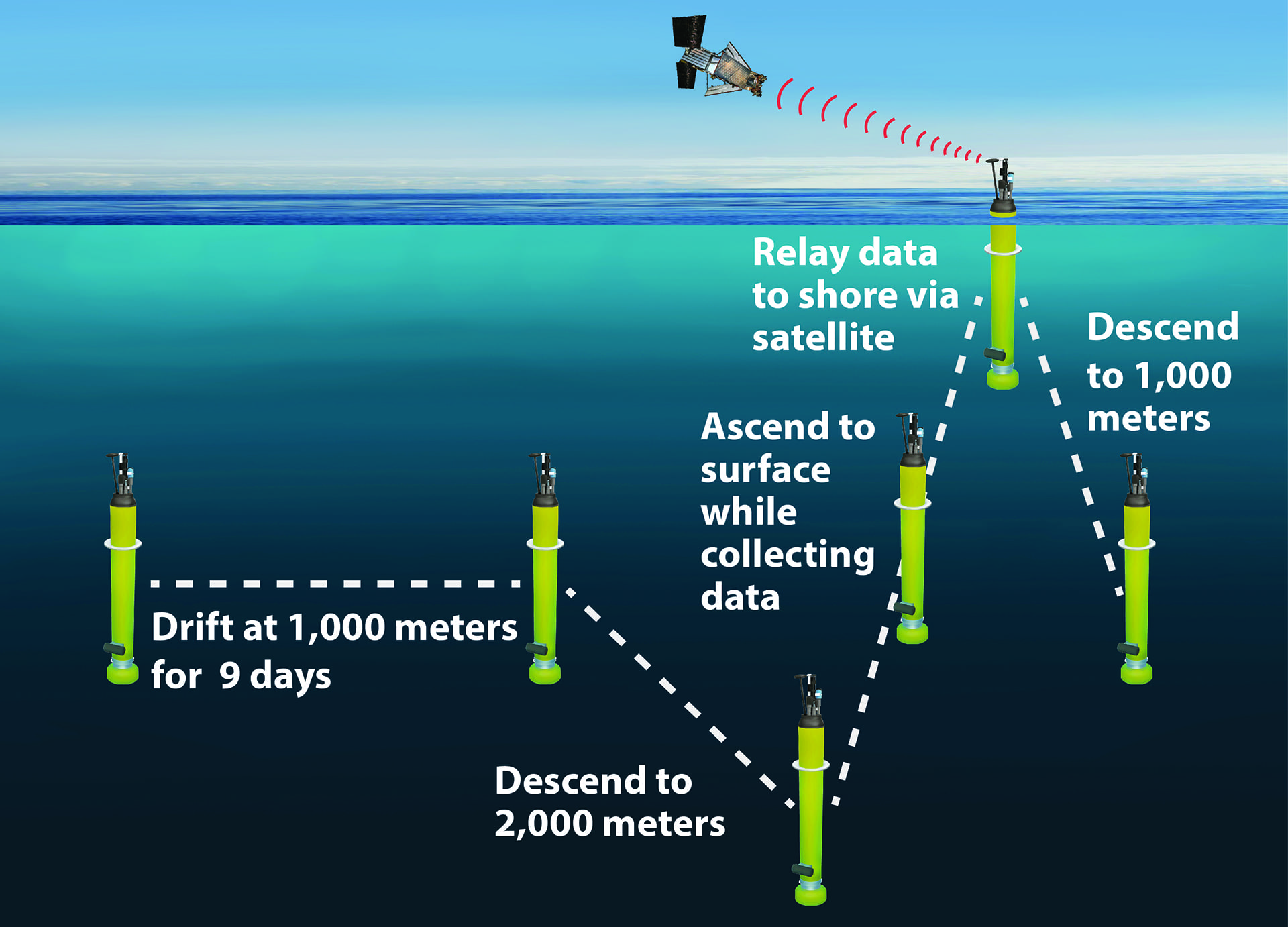 Illustration showing the operation of a typical Argo profiling float. (Image by Kim Fulton-Bennett, © 2020 MBARI)