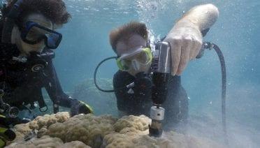 Porites coral