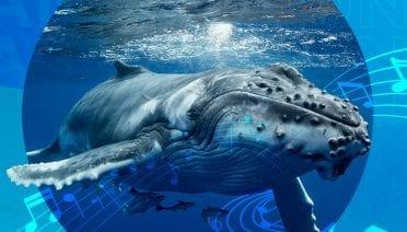 Whale 1920x1080 (1)
