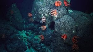 deep water corals