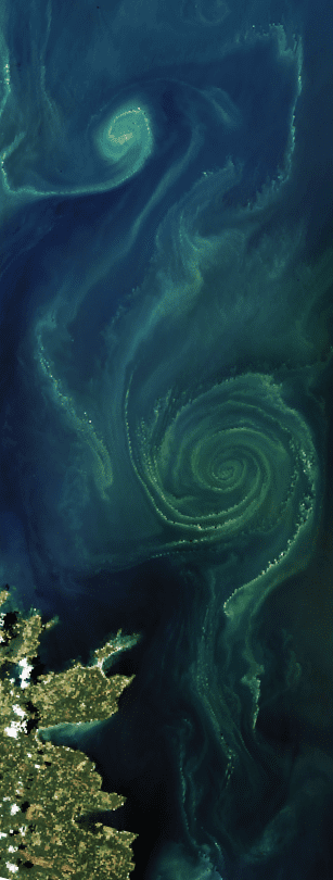 A green phytoplankton bloom swirls across a section of the Baltic Sea in July 2018. (Image by Joshua Stevens and Lauren Dauphin, NASA Earth Observatory, using Landsat data from the U.S. Geological Survey and MODIS data from LANCE/EOSDIS Rapid Response)