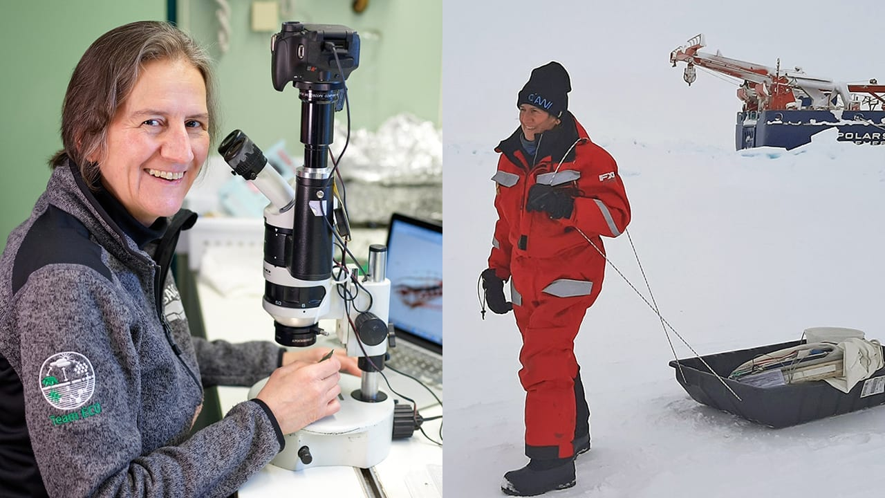 "Carin Ashjian (left) at work studying Arctic Ocean zooplankton in her lab space on the German icebreaker Polarstern and commuting to work (right) at the ""Ocean CIty"" ice camp near the ship. (Left photo by Michael Gutsche,  ©Alfred Wegener Institute. Right photo by Serdar Sakinan, ©Woods Hole Oceanographic Institution)"