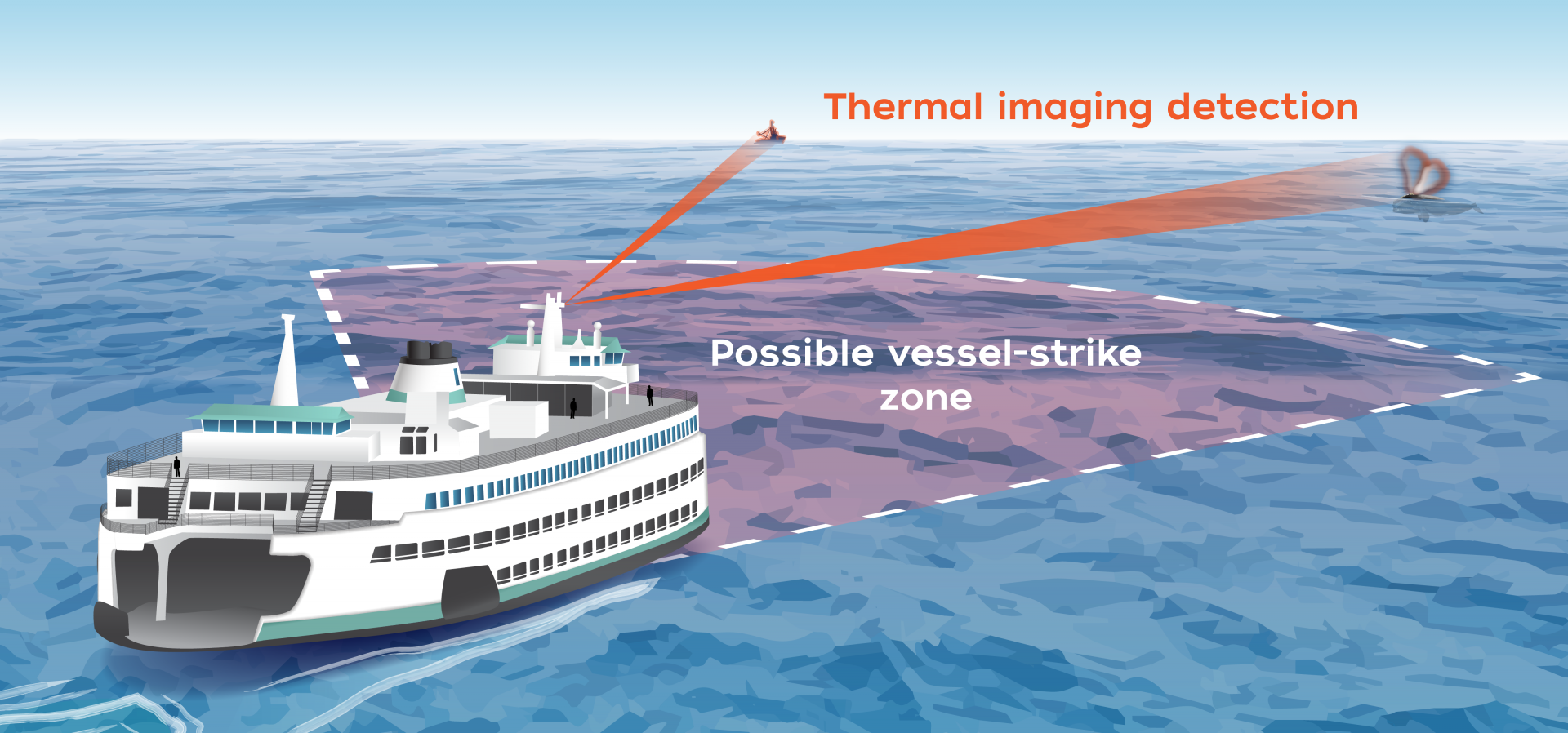Thermal imaging camera systems mounted on ferries and ships are able to detect moving objects several miles away. If a whale is identified, the system sends an alert within seconds, enough time for most vessels to slow down or change course. (Illustration by Natalie Renier, WHOI Creative.)