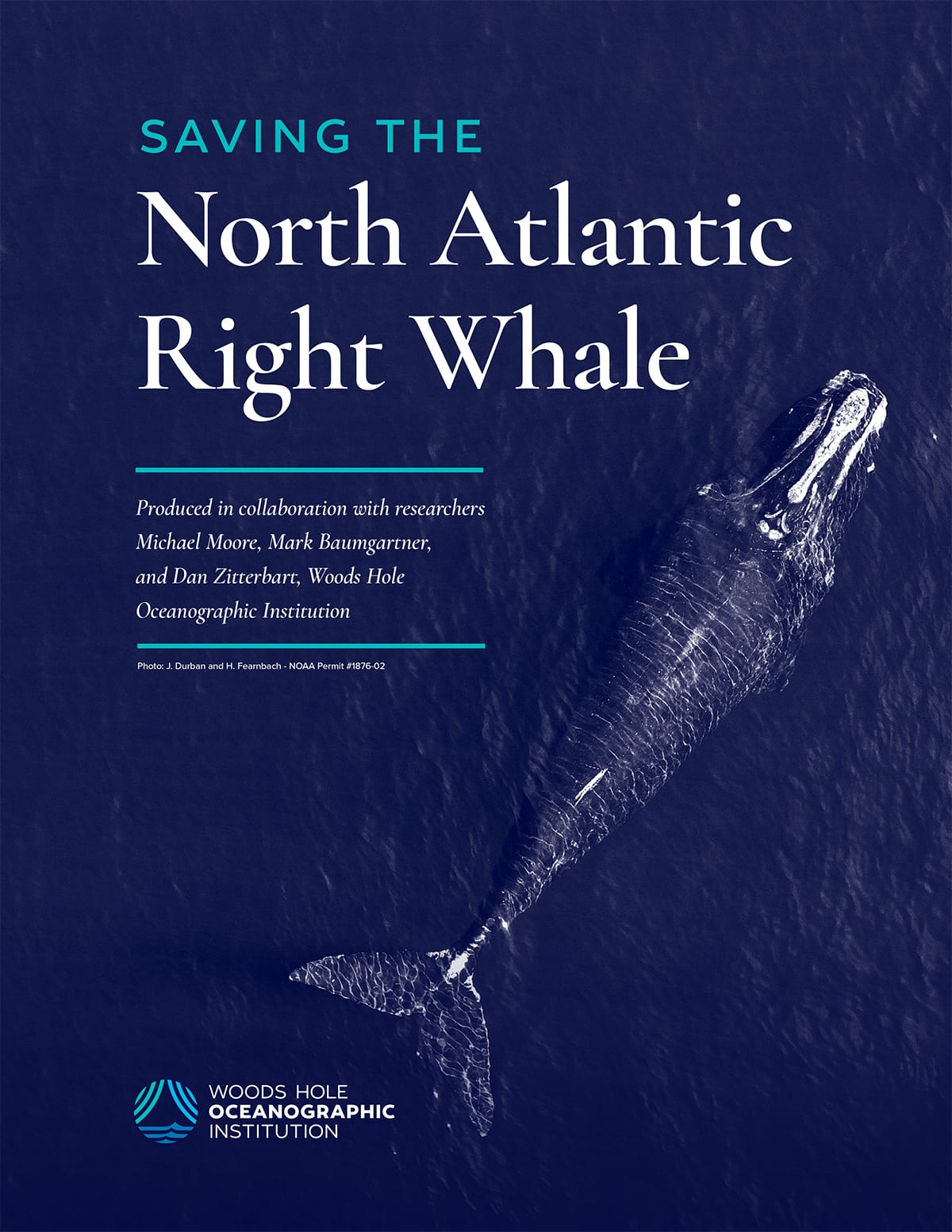 right whale report