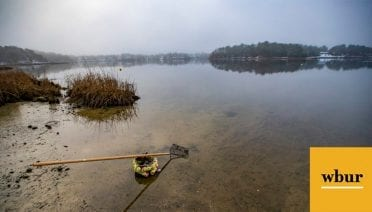 A oyster rake and basket sit on the edge of Little Buttermilk Bay on a misty morning in Buzzards Bay. (Jesse Costa/WBUR)