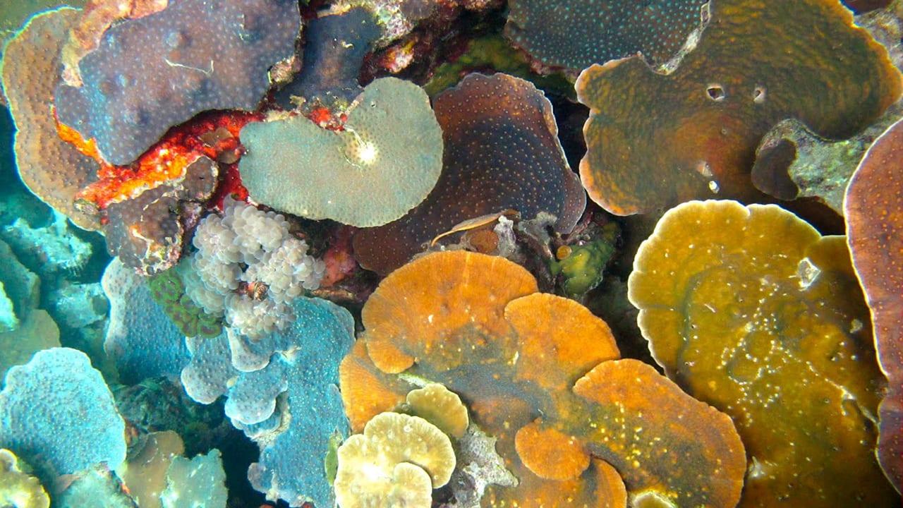 corals in Palau