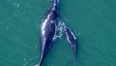 right whale promo