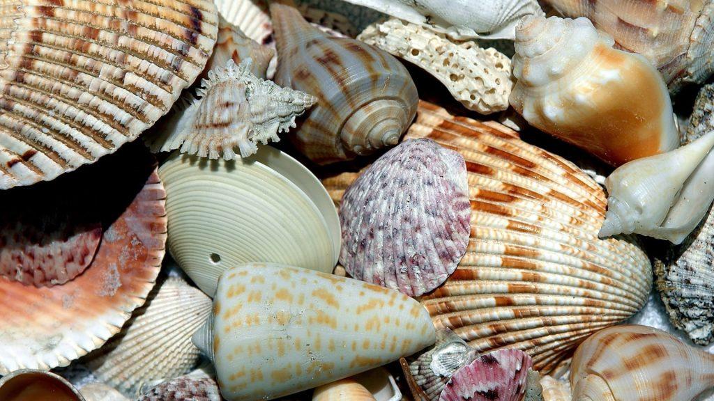 variety of seashells