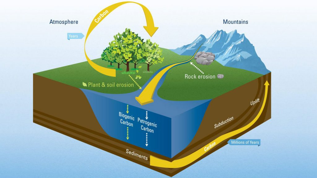 The worlds river systems sequester atmospheric carbon dioxide by transporting decaying organic material from land to the ocean. Although river transport of carbon to the ocean is not large enough to bail humans out of our global warming problem, knowing how much carbon rivers transport is important part of understanding the global carbon cycle that regulates Earth's climate. Scientists from WHOI recently calculated the first direct estimate of how much and in what form organic carbon is exported to the ocean by rivers. (Illustration by Eric S. Taylor, WHOI Creative © Woods Hole Oceanographic Institution)