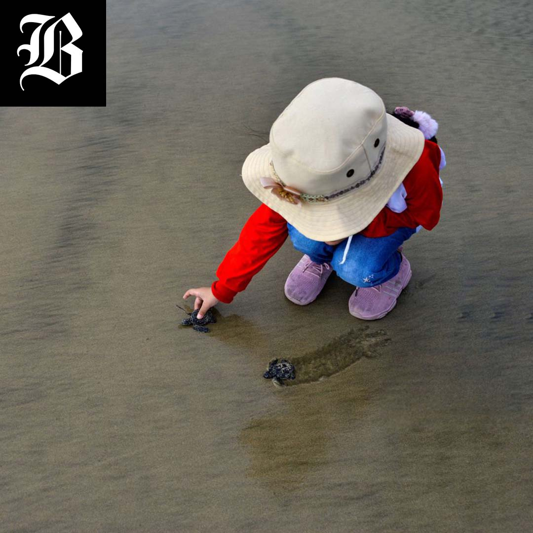 A child releases sea turtle hatchlings at Lhoknga beach, Aceh province on April 26. (CHAIDEER MAHYUDDIN/AFP VIA GETTY IMAGES)