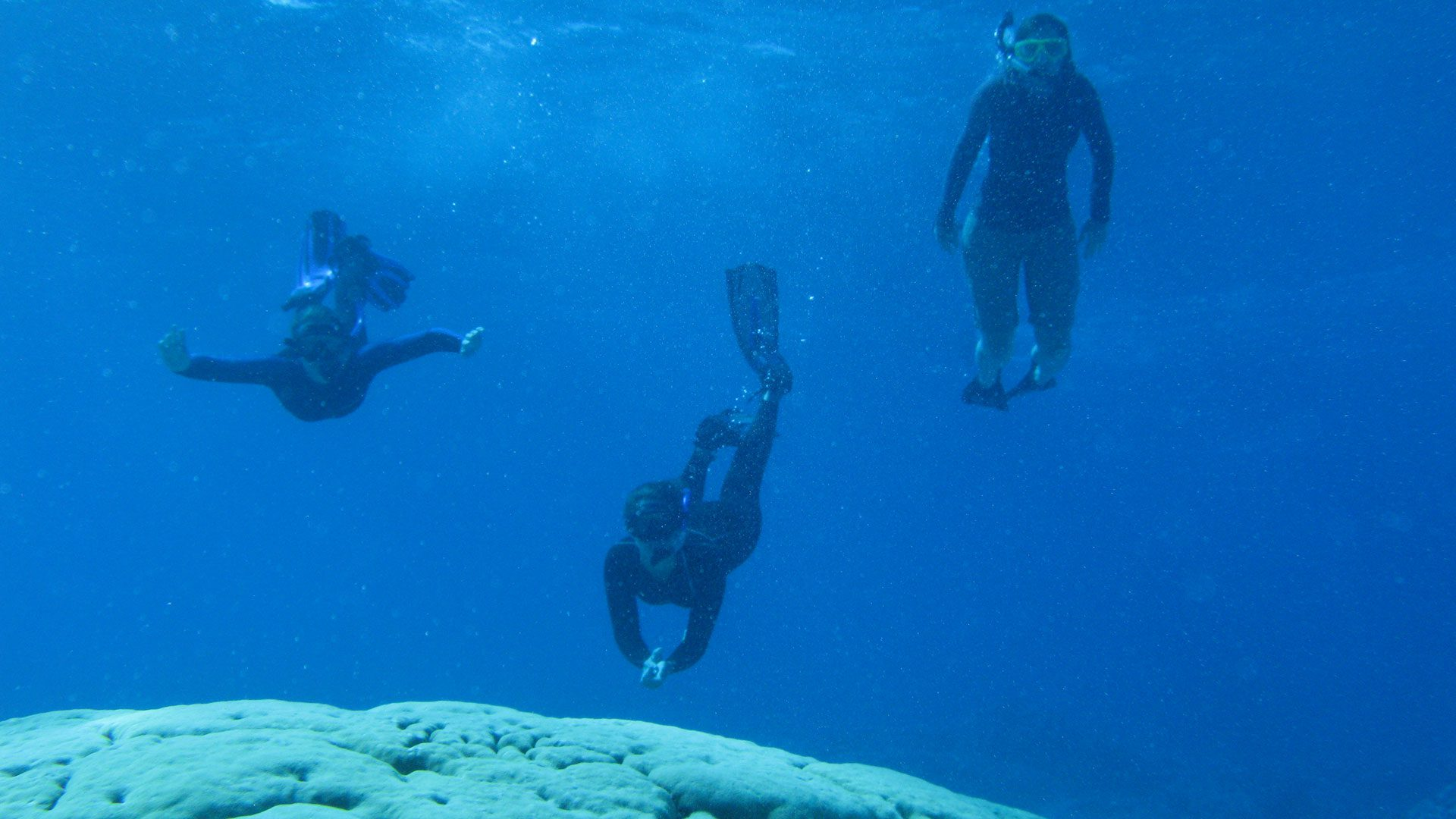 diving over coral