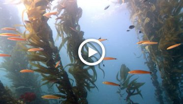 seaweed button YT_ThumbNails