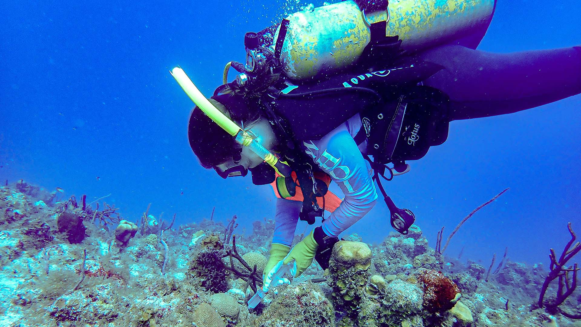 Cynthia Becker takes a water sample over a diseased coral near St. Thomas in the U.S. Virgin Islands in 2020. (Photo courtesy of Amy Apprill, © Woods Hole Oceanographic Institution)