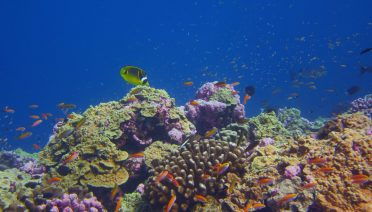 A healthy coral reef in the Phoenix Islands Protected Area in 2018. Photo credit: Michael Fox