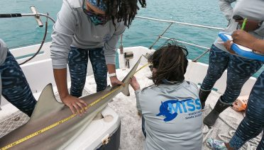 Jaida Elcock (standing) restrains a blacktip shark while a MISS workshop participant measures it. (Image courtesy of Field School, Miami, Florida.)