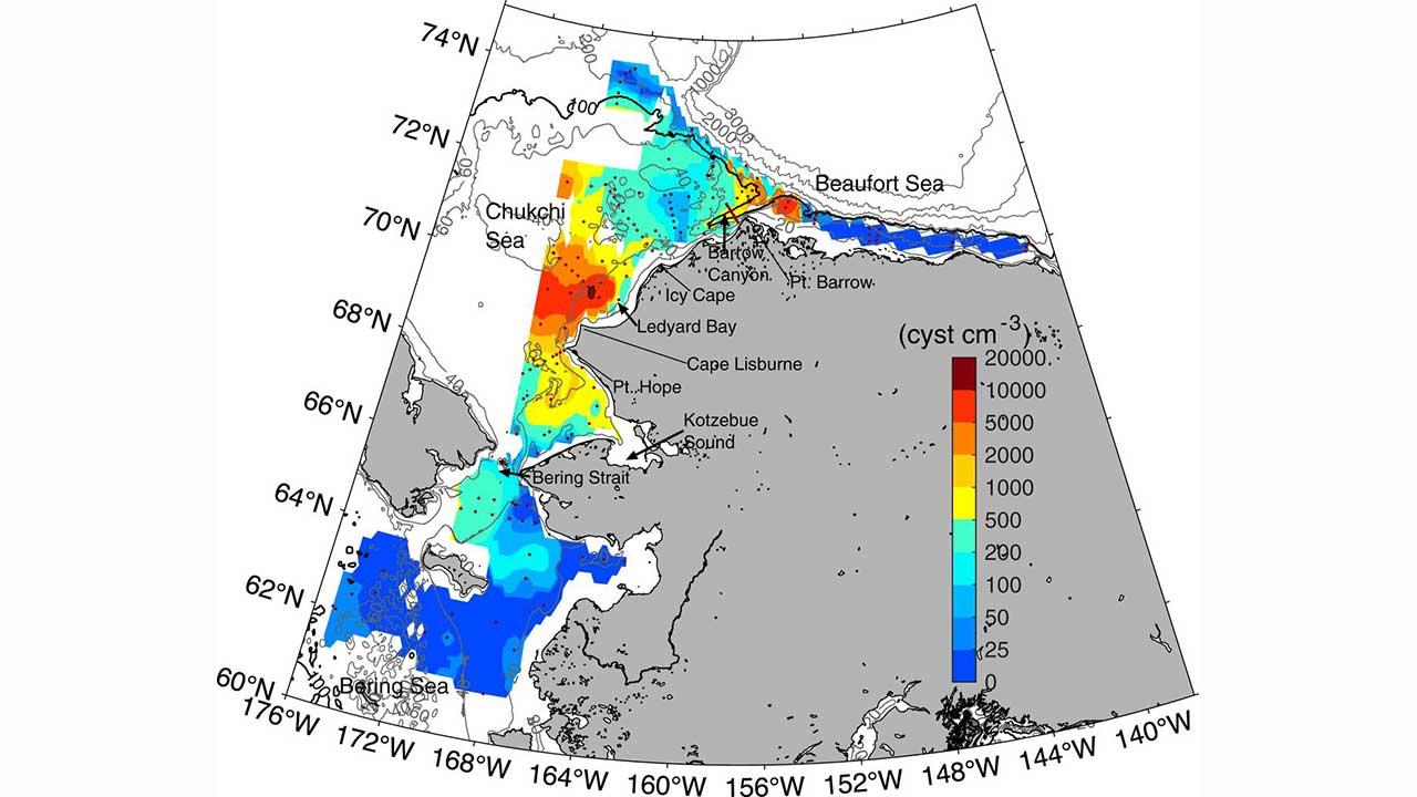 Localização de camadas densas de cistos de Alexandrium (vermelho) no fundo do mar da Baía de Ledyard e a leste de Pt. Barrow